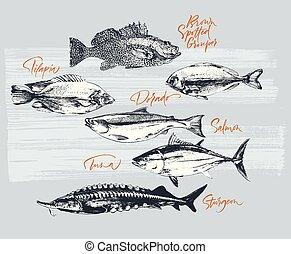 garoupa, salmão, atum, dorado, tilapia, esturjão