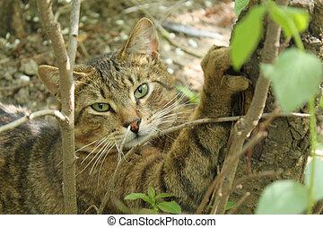 garras, sharpens, gato