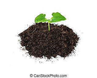 gartenerde, haufen, pflanzenkeim, grünpflanze