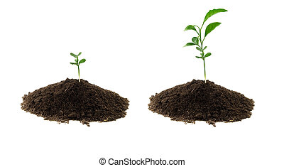 gartenerde, pflanze, grün
