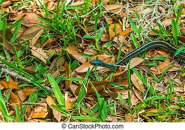 Garter Snake in Leaves and Grass