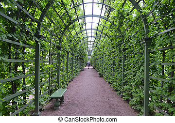 gasse, in, sommer, kleingarten, st.petersburg.