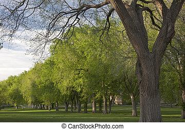 gasse, von, altes , amerikanische , ulme, bäume, in,...