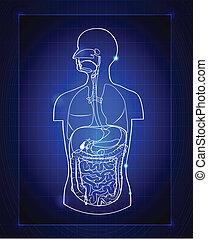 gastrointestinal, systém