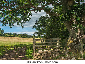 Gate Into A Green Field