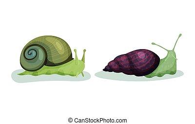gatear, vector, enroscado, conjunto, concha, caracoles, cáscara, gastropod