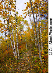 Gateway to October Trail
