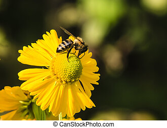 Gathering nectar, shallow depth of field