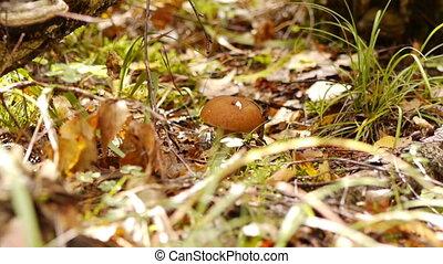 Gathering of mushrooms