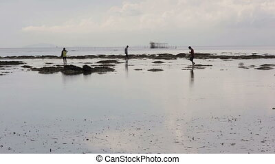 gathering oyster during low tide