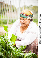 gathering some spinach - an african woman crouching in the...
