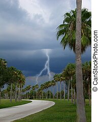 gathering storm clouds hovering over palm trees with one...