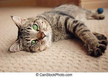 gatinho, esticado, tapete