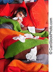 gatinho, lar, gripe
