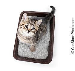 gatinho, ou, gato, em, banheiro, bandeja, caixa, com,...