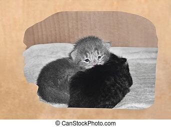 gatinhos, em, de, um, caixa papelão