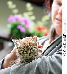 gatito, con, amante