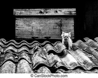 gatito, en, el, techo