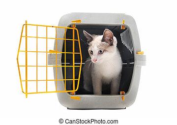 gatito, en, portadora de mascota
