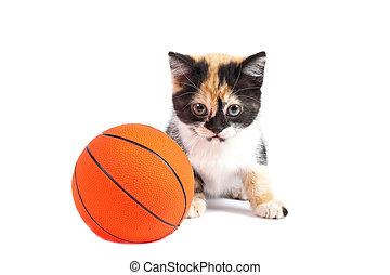 gatito, y, baloncesto