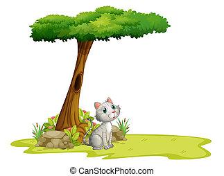 gato, árbol, debajo
