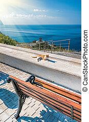 gato, abertos, vista., espaço, park., mar, ou, banco, solidão, parque, vazio, ensolarado, concept., negligenciar, madeira, mountain., relaxe, bonito, vermelho, vista, costa, viagem
