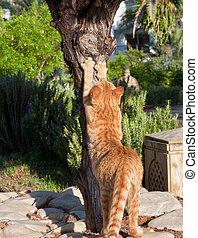 gato, afilado, el suyo, garras, en, un, árbol