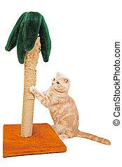 gato, afilado, el suyo, garras, en, un, palma