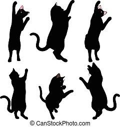 gato, alcance, silueta, postura