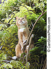 gato, alerta, vermelho, árvore