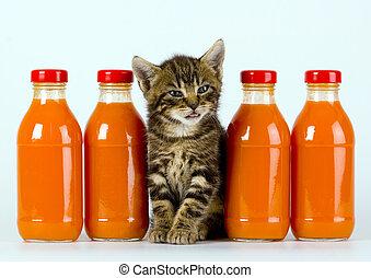 gato anaranjado, bebida, y
