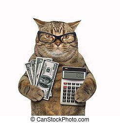 gato, banquero