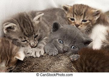 gato, bebes