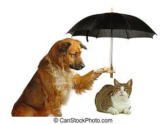 gato, cão, protegendo