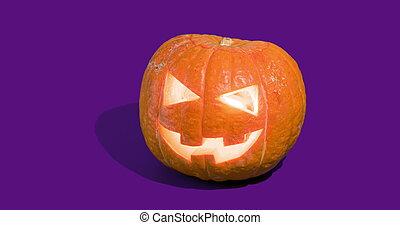 gato, calabazas, halloween, o'lantern, o