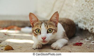 gato, com, olhos largo aberto