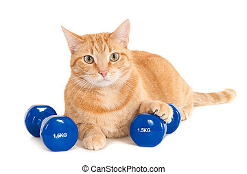gato, con, dumbbells