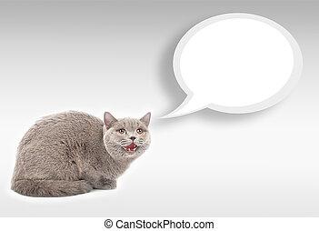 gato, con, humano, ojos