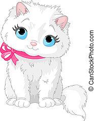 gato, cute, branca