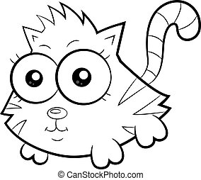 gato, cute