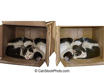 gato, deitando, em, seu, favorito, caixa