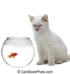 gato, e, um, peixe ouro