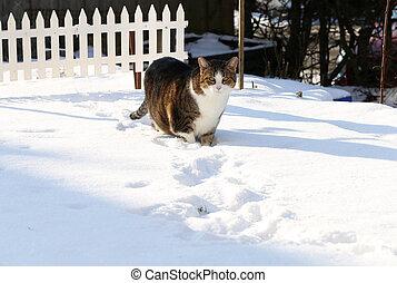 gato, em, a, neve