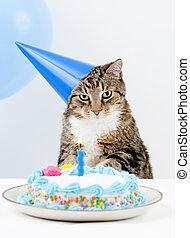 gato, fiesta de cumpleaños