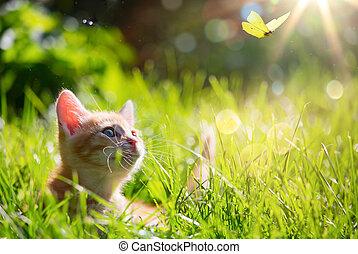 gato, gatito, /, arte, joven, mariquita, lit, caza, espalda