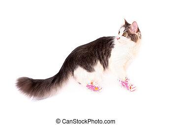 gato, llevando, en, divertido, rosa, shoes, va, aislado, blanco, plano de fondo