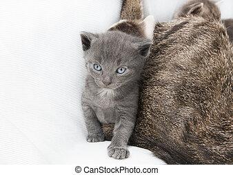 gato, madre, babie, luego
