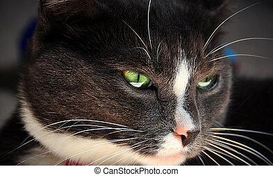 gato, mirar fijamente