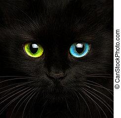 gato negro, con, ojos, de, diferente, colores, primer plano