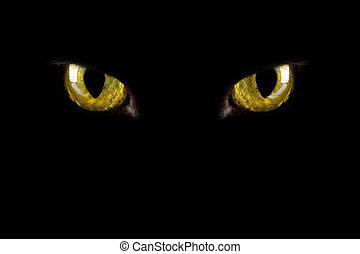gato, ojos, encendido, en, el, dark., halloween, plano de...